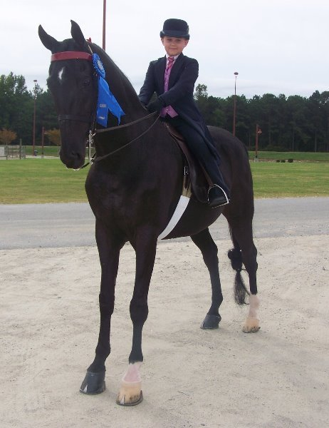 2008-10-11-10-years-later-back-to-saddlebreds-sanannah-blackie-with-a-blue-ribbon-as-usual