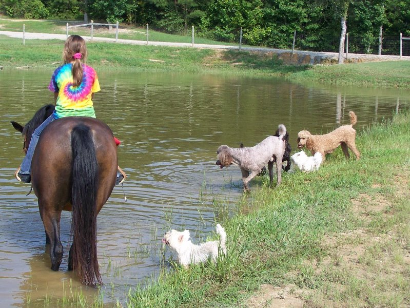 2008-9-7-savannah-is-in-heaven-she-with-her-dogs-and-her-horse