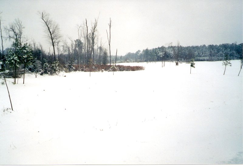 2001-2002-winter-land-in-spring-hope