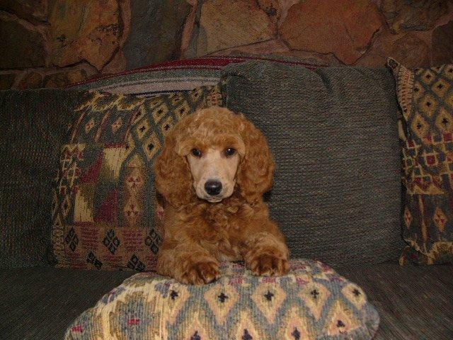 2006-11-8-wks-old