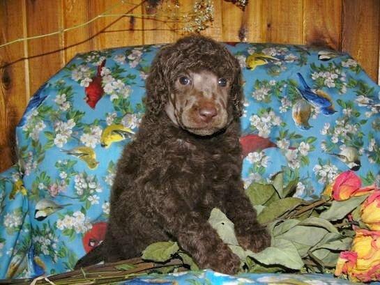 2-2007-5-rachel-memas-little-girl-at-4-weeks-old