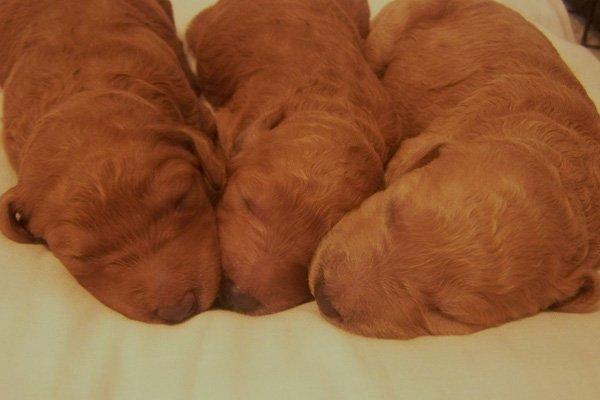 5-more-precious-babies