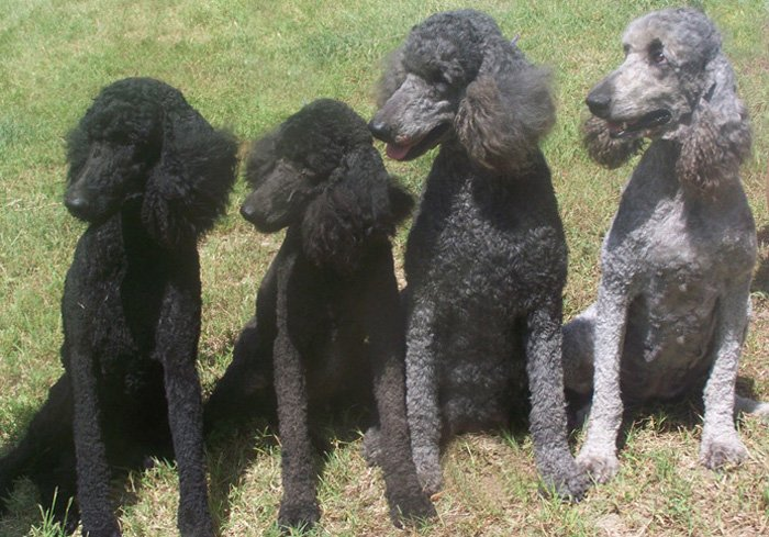 Left to Right Gunsmoke-Black,Raven-Blue,Emmie Grey,Pepper-Silver left to right (1)