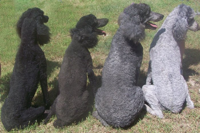 Left to Right Gunsmoke-Black,Raven-Blue,Emmie Grey,Pepper-Silver left to right (2)