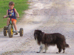 2006-7-domino-was-lukes-side-kick-from-the-time-luke-was-18-months-old-arrowhead-acres-farm