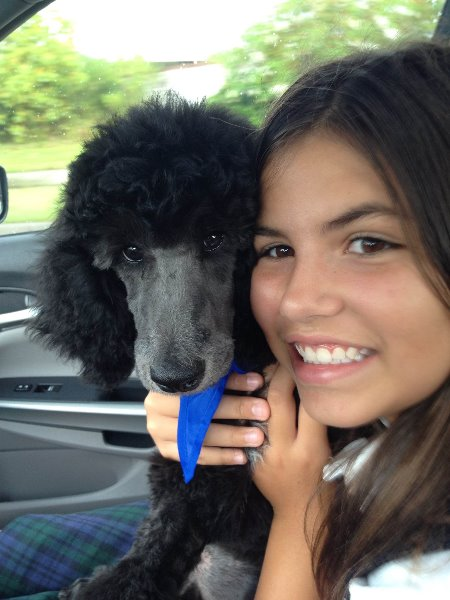 Child Holding a Black Standard Poodle Puppy