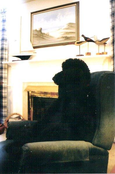 1999-diane-kulik-balee-stormy-baron-1