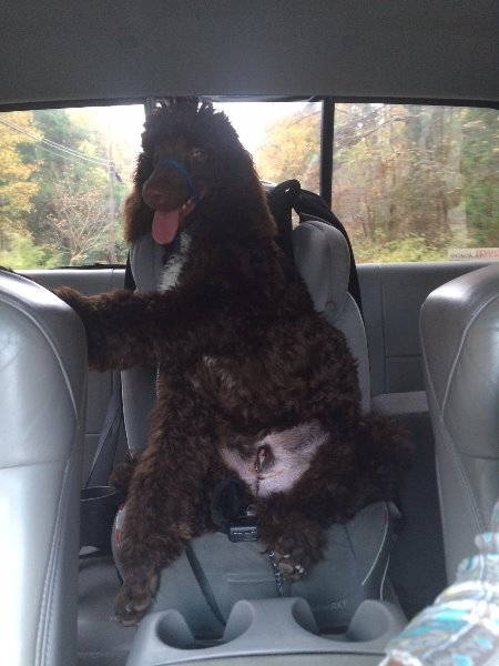 2015-11-odie-sitting-in-the-babies-car-seat