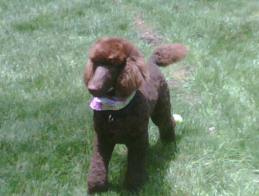 penny-just-groomed