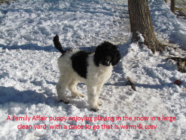 14-puppy-playing-in-the-snow-in-a-clean-large-area