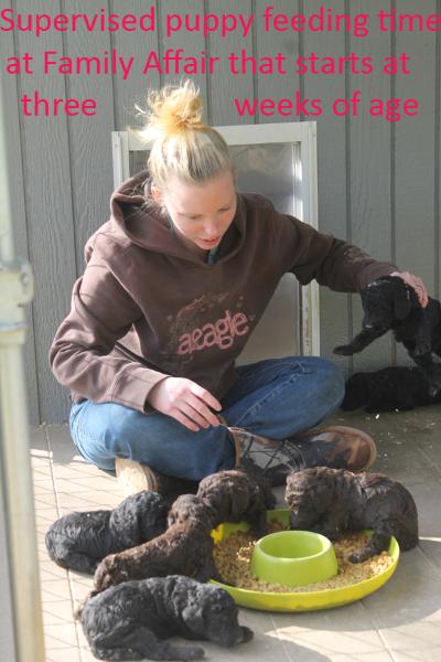 7-puppy-feeding