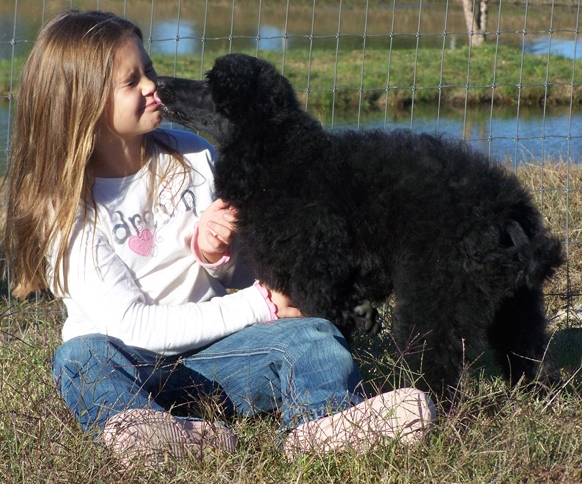 A Child Sitting on Grass With a Black Standard Poodle