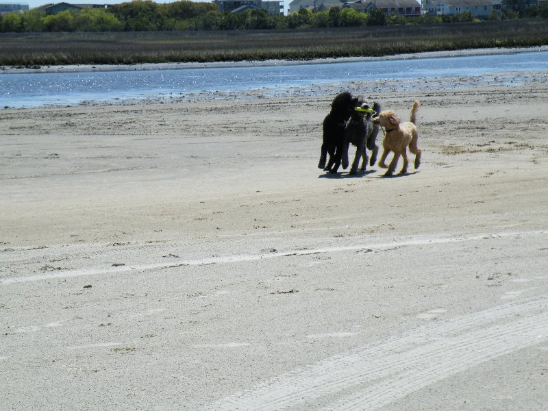 poo-beach-2010-014