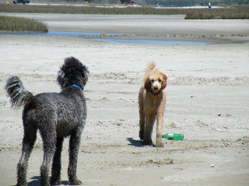 poo-beach-2010-023