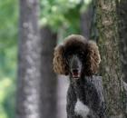 truffles-10