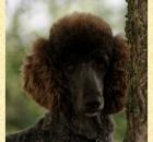 truffles-16