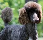 truffles-19