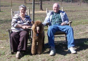 Couple Sitting Outside With a Standard Poodle