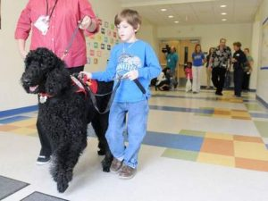 Boy Walking With a Standard Poodle Guide Dog From Family Affair Standards