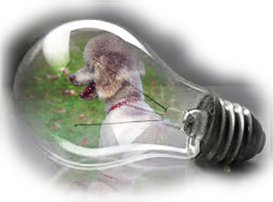 Standard Poodle & Lightbulb Graphic