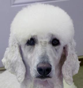 ALASKA – Family Affair's Alaskan Snow Angel – Adopted