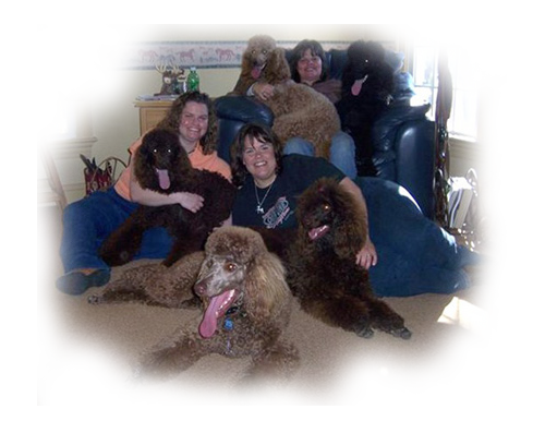 Female Poodles for Sale
