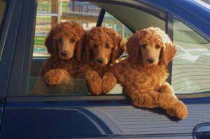 puppypic