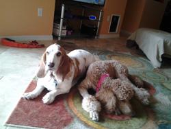 Scarlet & Russel after 3 mile walk