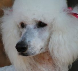 IVORY – Family Affair's Ivory Snow – Adopted