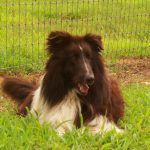 DOMINO – Our Guardian Angel