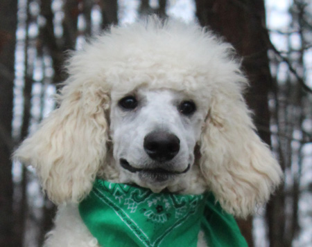 #0093 Bianca's White – Green Polish – Male