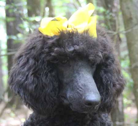 #0052 Odyssey's Black – Yellow Polish – Female