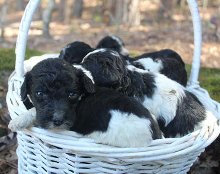 Fern and Trey's Litter – All Parti's