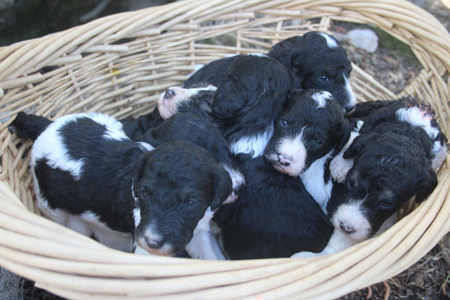 Cherokee and Trey's Litter – All Partis