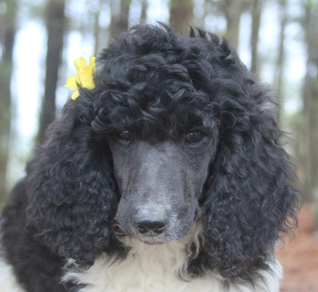 #0035 Eliza's Black/White Parti – Yellow Polish – Female