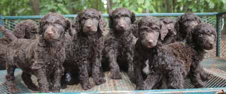 Snuggles and Toby's Litter – All Browns