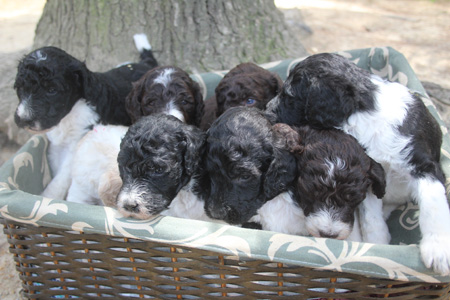Chanel and King's Litter – All Partis