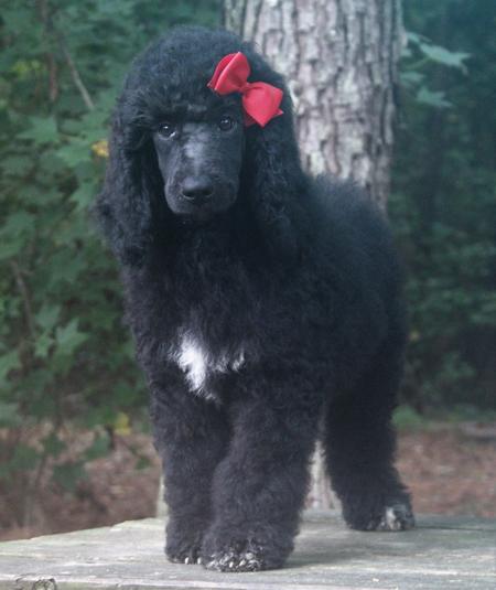 #135 Kodiak's Black – Red Polish – Female