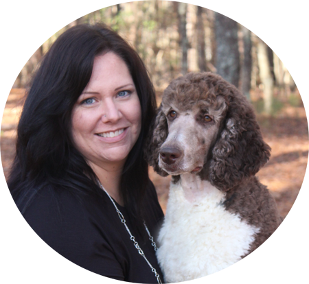 Red White Standard Poodles For Sale From Family Affair Standards