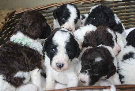 Patches and Comanche's Litter – All Partis