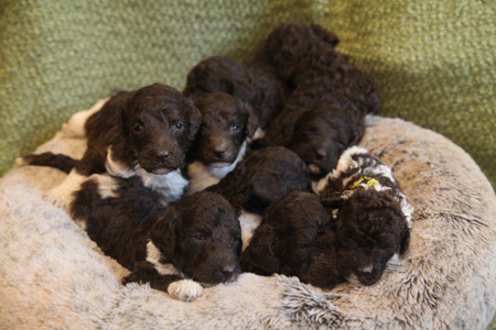 Charm and Comanche's Litter – All Partis