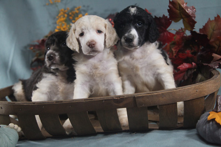 Tabitha and Trey's Litter – All Partis