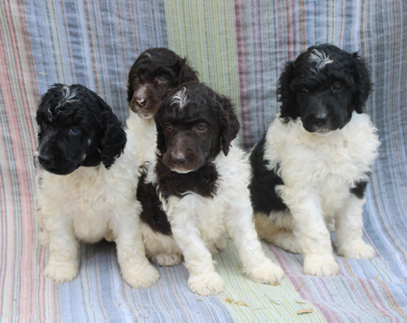 Octavia and Comanche's Litter – All Partis